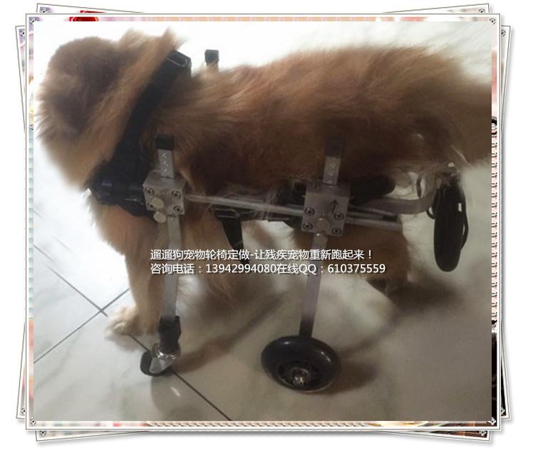 รถเข็นสำหรับสัตว์พิการ วีลแชร์หมา วีลแชร์แมว วีลแชร์สำหรับสัตว์เลี้ยงอายุมาก ขนาดเล็ก สำหรับน้ำหนัก 2-4 KG แบบ 4 ล้อ