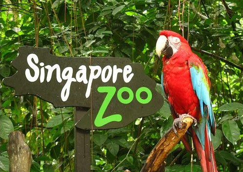 Singapore Zoo + Tram Ride (เด็ก)
