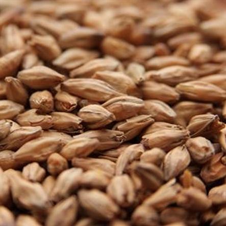 Beech Smoked Barley Malt - 1LB